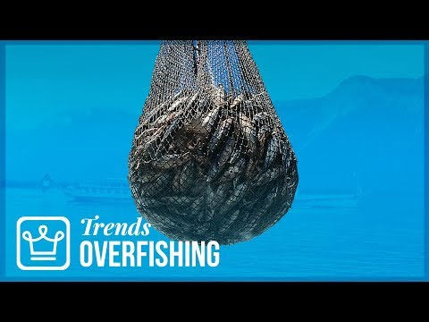 Overfishing: How Long Until We Run Out Of Fish