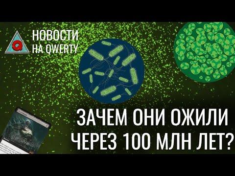 Сроки запуска ИТЭР и настоящее движение сперматозоидов. Главное на QWERTY №135