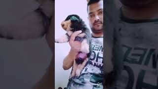 Cheapest price Rottweiler puppies in delhi.. Call or whatsapp 8527699797