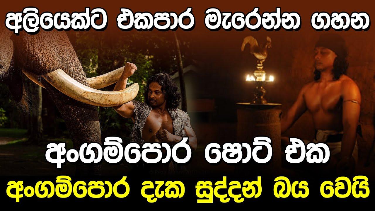 අංගම්පොර දැක සුද්දන් බය වෙයි | Angampora Sri Lanka |