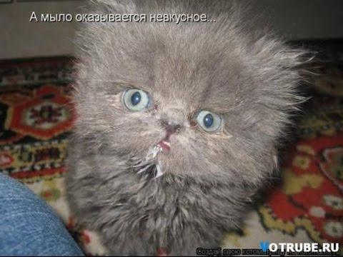 Новинки приколов про котов