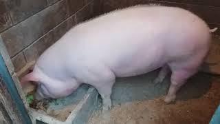 видео Пищевые добавки для животных