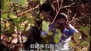 National 02夺命大黄蜂