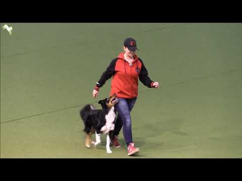 FCI Dog Dancing World Championship 2017 Qualifiying Freestyle