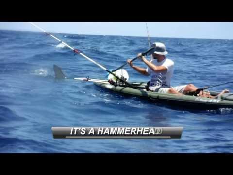 Hammerhead Shark Attacks Kayak Fisherman!!!
