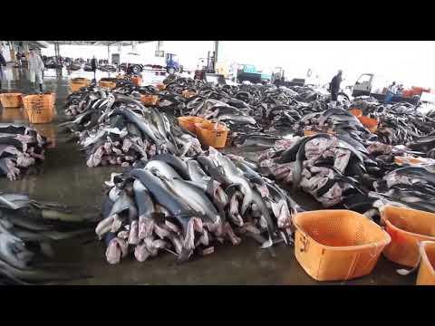 Overfishing In Canada