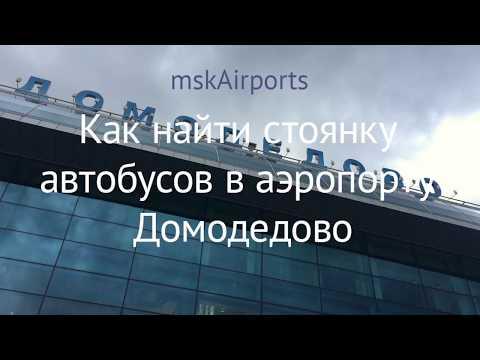 Как найти стоянку автобусов в аэропорту Домодедово