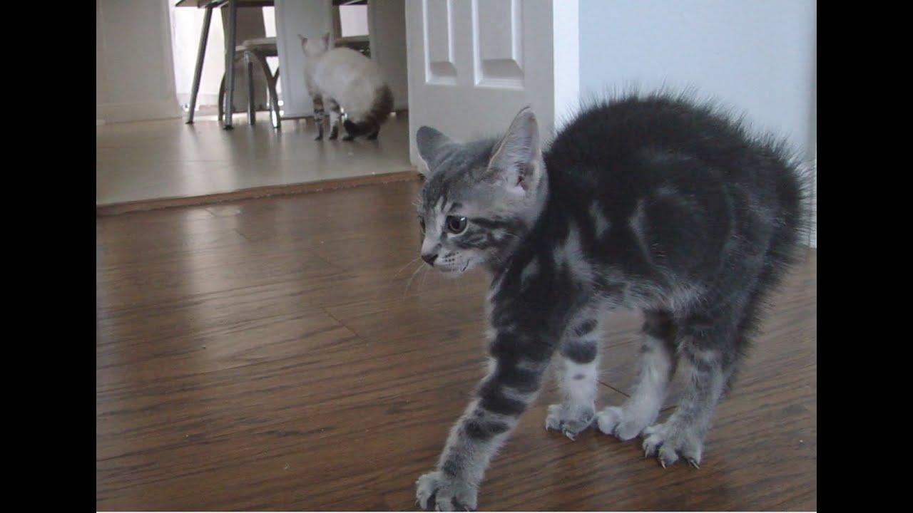 HELP!!! my kitten won't use the litterbox!!?