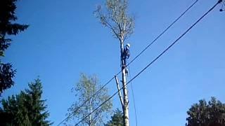89215548127 Спилить дерево по частям.(http://dereva-net.ucoz.ru/ Поможем вам удалить, спилить , свалить любые деревья! Вы не знаете, как спилить дерево рядом..., 2011-07-19T09:09:49.000Z)