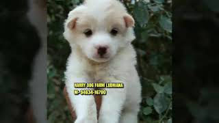 Pet Shop & Dog Farm Ludhiana M- 94634-16700