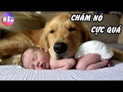 Phận làm Gâu Đần, chăm cho con Sen còn hơn BẢO MẪU | Yêu Lu Official