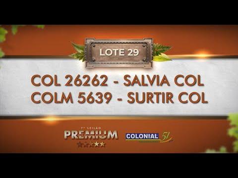 LOTE 29   COL 26262, COLM 5639