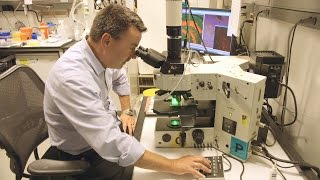 The Hippocampus: A Window to Brain Research at NIH