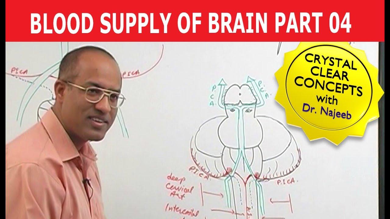 Blood Supply To Brain Neuroanatomy Part 411 Youtube