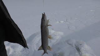 Зимняя рыбалка на жерлицы Февраль 2020