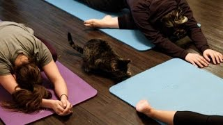 Cat Yoga - Yes, you can
