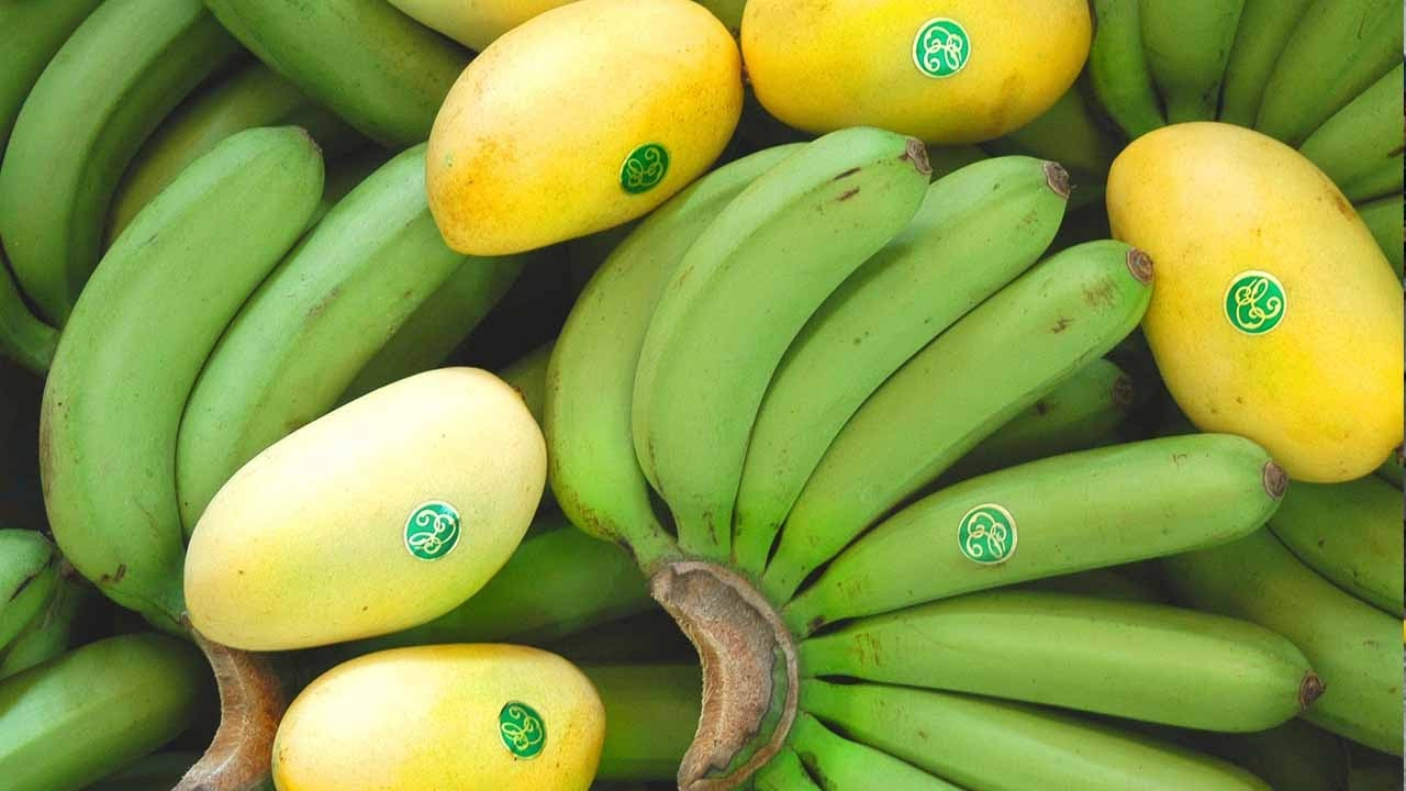 the fate of a banana Banana is a lively history of the cultivation and politics of the banana as the subtitle suggests, it is a popular account, but koeppel avoids personal travel stories and keeps the biographical material focused.