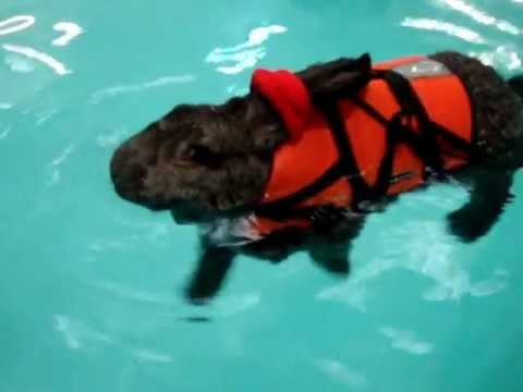 rabbit hydrotherapy heidi bunny 7th swimming session part 1 youtube