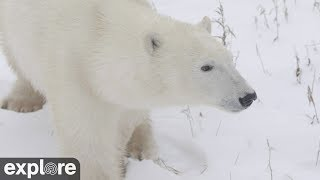 Cape North Camera - Churchill Cam, Wapusk National Park powered by EXPLORE.org thumbnail