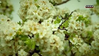 Пролет на Света Гора