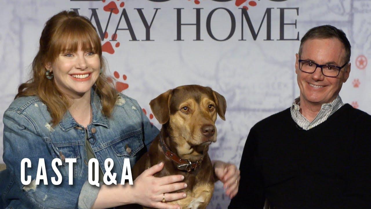 A Dog S Way Home Cast Q A Bryce Dallas Howard W Bruce Cameron Youtube