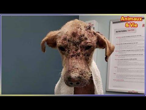 Maigre et chauve, ce chien a passé des semaines à errer dans les rues avant qu'un miracle ...