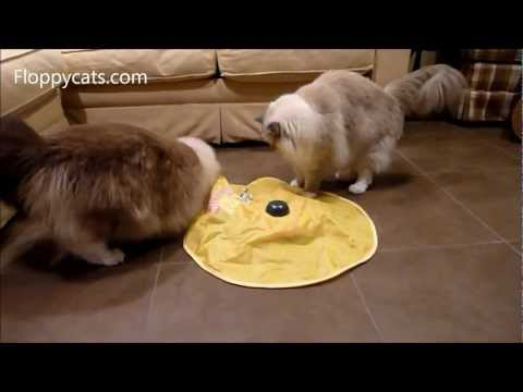 Cat Teaser Toy: The Undercover Mouse or The Cat's Meow Interactive Cat Toy - Floppycats