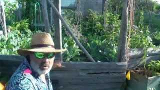 Three Gates To My Backyard Permaculture Main Crop Garden