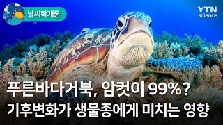[날씨학개론] 푸른바다거북 암컷이 99%?…기후변화가 …