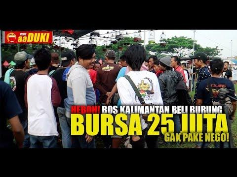 HEBOH! Bos Kalimantan Beli Burung Bursa 25 JUTA Gak Pake NEGO!