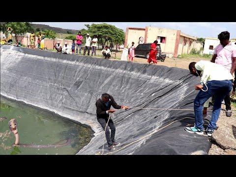 खेत तालाब मे गिरा कोबरा सांप, फिर क्या हुआ आप ही देखिये.. Rescue spectacle cobra snake Ahmednagar