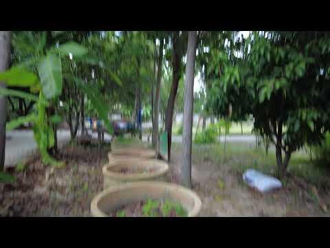 สวนในรีสอร์ท กรีนเฮ้าท์ลานสัก