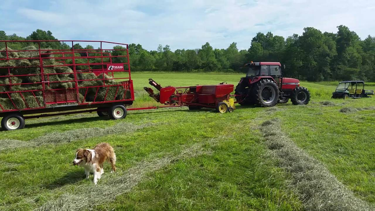 Hay Baling with our New Holland 276 and Case IH 5230
