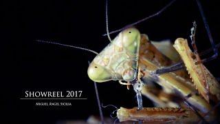 HD Showreel 2017
