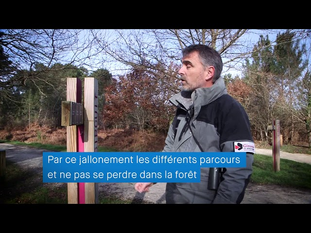 Gironde Mag' - La forêt Migelane