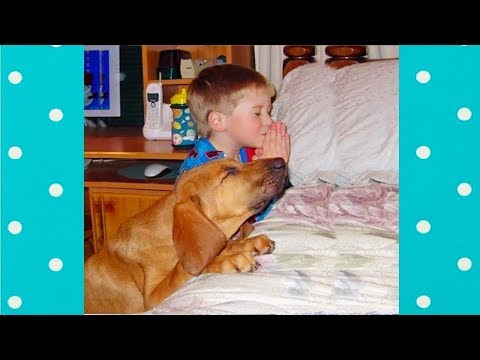 Amazing ! Smart Dogs Praying Before Eating 🙏🙏🙏Top Dogs Video Compilation