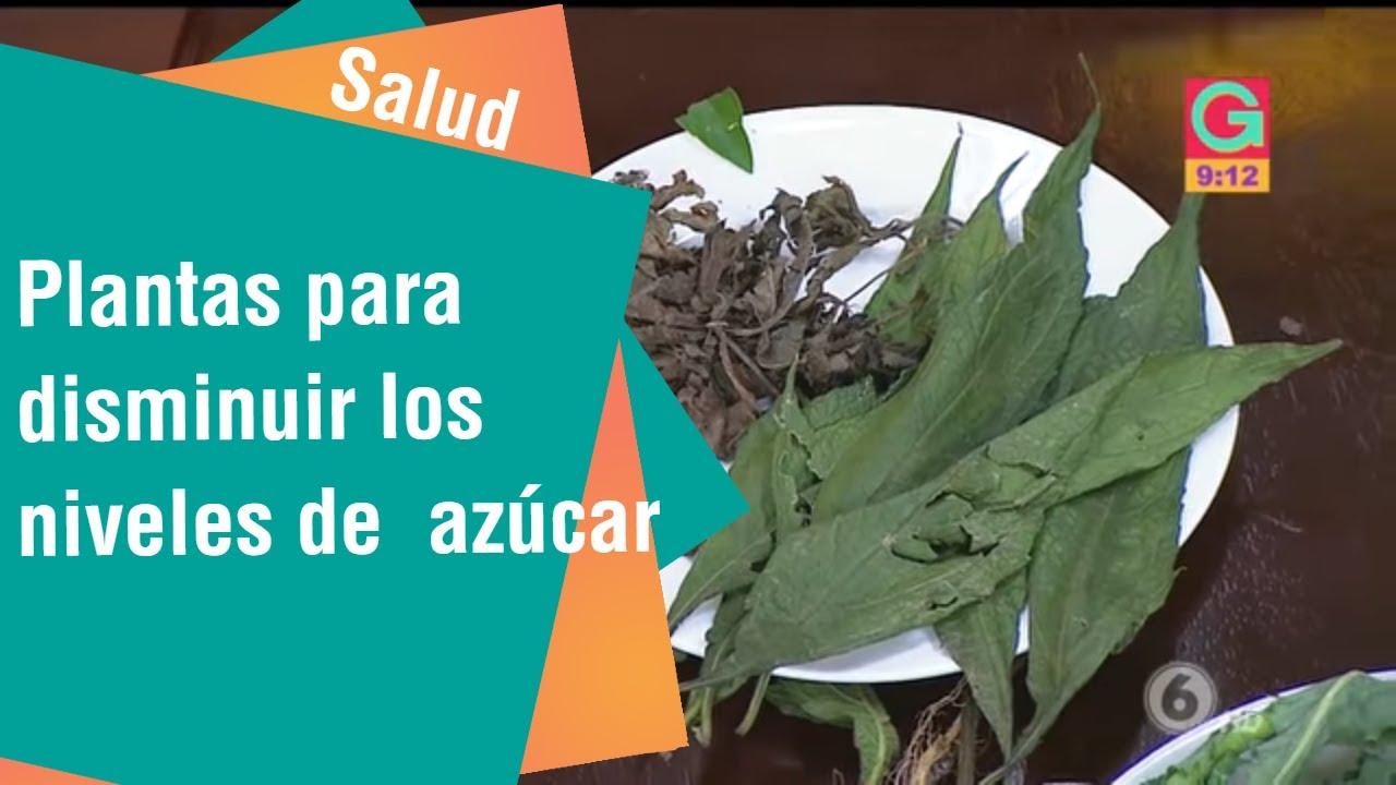 hierbas acuarticas para la diabetes