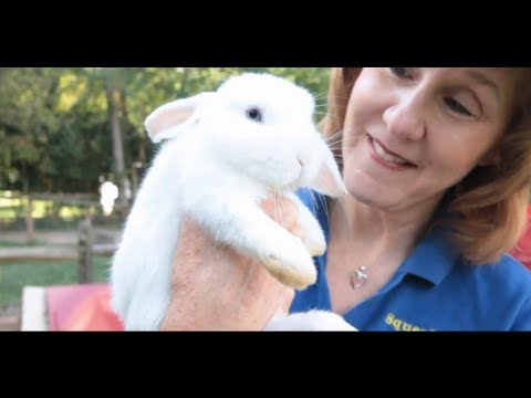 what-is-a-dwarf-rabbit?-|-small-pets