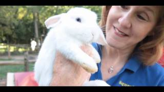 What Is a Dwarf Rabbit? | Small Pets