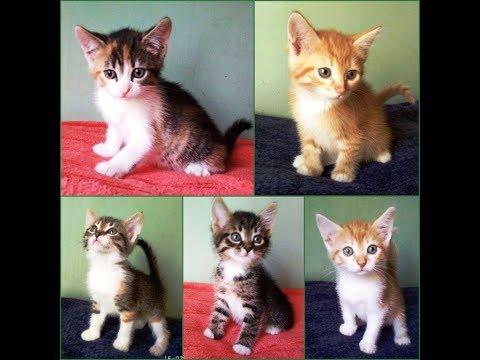 Возьмите котенка в добрые руки бесплатно