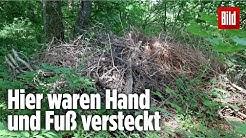 Abgeschnittene Affen-Gliedmaßen in Bayern! | Jagdhund findet Schimpansen-Körperteile im Wald