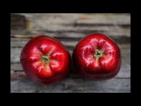 apple fruit slideshow apple fruit slideshow