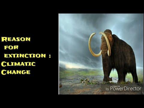 Extinct Animals | Top 5 | WALK ON WATER