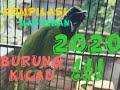 Masteran Burung Kicau Full Suara Besetan Suara Jernih Untuk Semua Jenis Burung  Mp3 - Mp4 Download