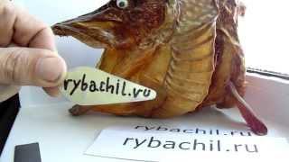 Изготовление блесны на щуку в домашних условиях.Видео rybachil.ru(При изготовлении блесны колебалки атом rybachil.ru своими руками для ловли щуки нам понадобятся лента листового..., 2014-01-21T06:12:59.000Z)