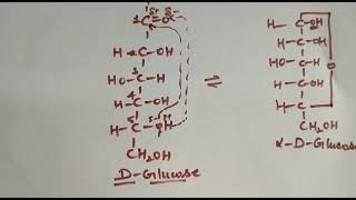 Class 12 biomolecules trick for Fischer and Haworth projections of glucose
