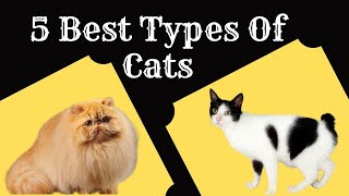 5 Best Types Of Cats Around The World | Most Intelligent Cat Breeds Ever | TopEcho