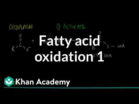 fatty-acid-oxidation---part-i