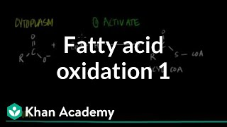 Fatty Acid Oxidation - Part I