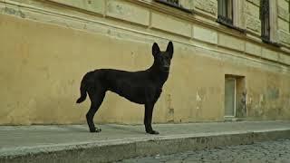 Танцующая собака из клипа little big-SKIBIDI